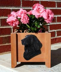 Flat-Coat Retriever - Black