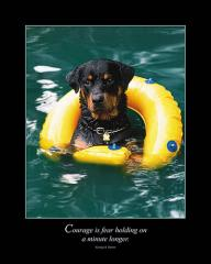 Rottweiler with Life Ring Dog Poster